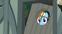 Rainbow Dash peeking through the window S4E04