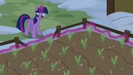 S07E11 Twilight wspomaga wzrost roślin swoją magią
