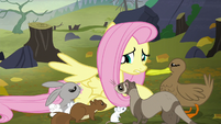 """Fluttershy """"and you're freezing!"""" S5E23"""