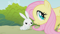 """Fluttershy and Angel """"you need some water?"""" S1E07"""