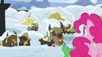 Pinkie Pie looking at agreeing yaks S7E11