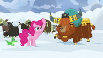 Pinkie Pie makes a drill with her mane S7E11