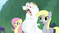 Fluttershy, Bulk, and Derpy shocked S4E10