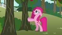 Pinkie Pie shaking a tree S03E13
