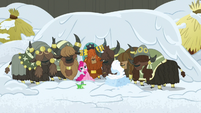 Pinkie and yaks sway to nonexistent music S7E11