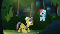 Daring and Rainbow in the forest S4E04