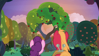 Mac and Sugar under the apple-pear tree S9E23