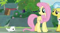 Bunny Fluttershy makes it to the sanctuary S9E18