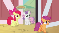 Scootaloo investigating the barn S9E23