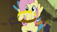Fluttershy catching ring S4E04