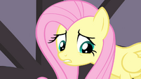 "Fluttershy sad about her ""last performance"" S4E14"