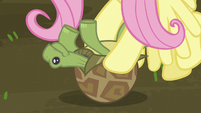 Fluttershy saves the turtle S5E23