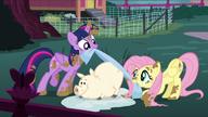 S05E03 Twilight i Fluttershy myją zwierzęta