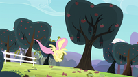 Fluttershy landing in front of a tree S4E7