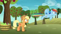 Rainbow Dash speeds away from Applejack S8E5