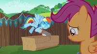 Rainbow excited; Scootaloo depressed S6E14