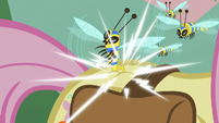 Flash bee stinging Fluttershy's flank S7E20