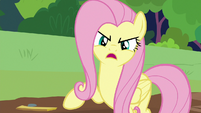 "Fluttershy ""what animals need is a sanctuary"" S7E5"