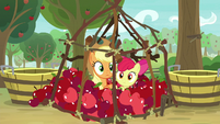 AJ and Apple Bloom inside the cage S9E10