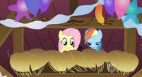 Fluttershy and Rainbow Dash hiding S2E14