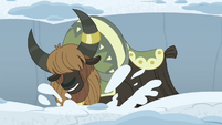 Yak digs through the snow very loudly S7E11