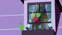 Several apples hit Apple Bloom's window S8E25