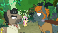 Fluttershy calls out to Caballeron and Rogue S9E21