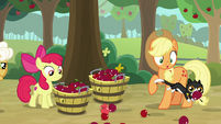 Goldie Delicious' cat running over apples S9E10