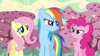 Rainbow Dash I don't know S2E14