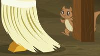 Squirrel watches pumpkin chunk get swept up S5E23