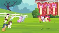 Diamond Tiara, Silver Spoon and other foals walking towards CMC S4E15
