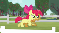 Apple Bloom and Babs sweating S3E08