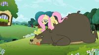 Fluttershy Massaging Bear S2E3