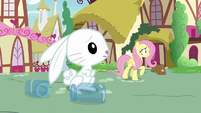 Fluttershy and Angel looking off-screen S9E18