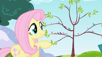 Fluttershy smiling at the birds S1E1