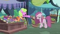 Daisy greeting depressed Pinkie Pie S8E18
