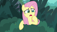 Fluttershy -some poor creature's in trouble!- S8E18