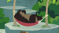 Grizzly bear lounging in a hammock S7E5