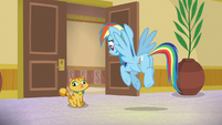 Rainbow stops in front of one of Goldie's cats S8E5