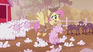 S05E25 Fluttershy goli owce