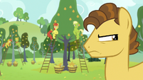 Grand Pear and Pears glaring at Apple family S7E13