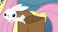 Angel Bunny hops out of Fluttershy's bag S8E2