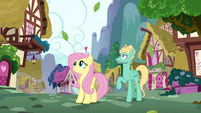 Fluttershy and Zephyr look up at Rainbow S6E11