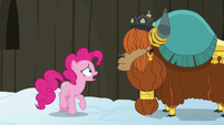 """Pinkie Pie confused """"yak not?"""" S7E11"""