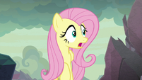 """Fluttershy """"are those bongo drums?"""" S9E9"""