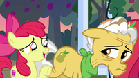 """Apple Bloom """"learnin' all about Mom and Dad"""" S7E13"""