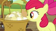 S05E17 Apple Bloom odkłada jajko do koszyka