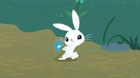 Angel Bunny picking a flower S8E18