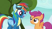 """Rainbow Dash """"right before the finale"""" S6E7"""