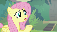 """Fluttershy """"that sounds serious"""" S8E4"""
